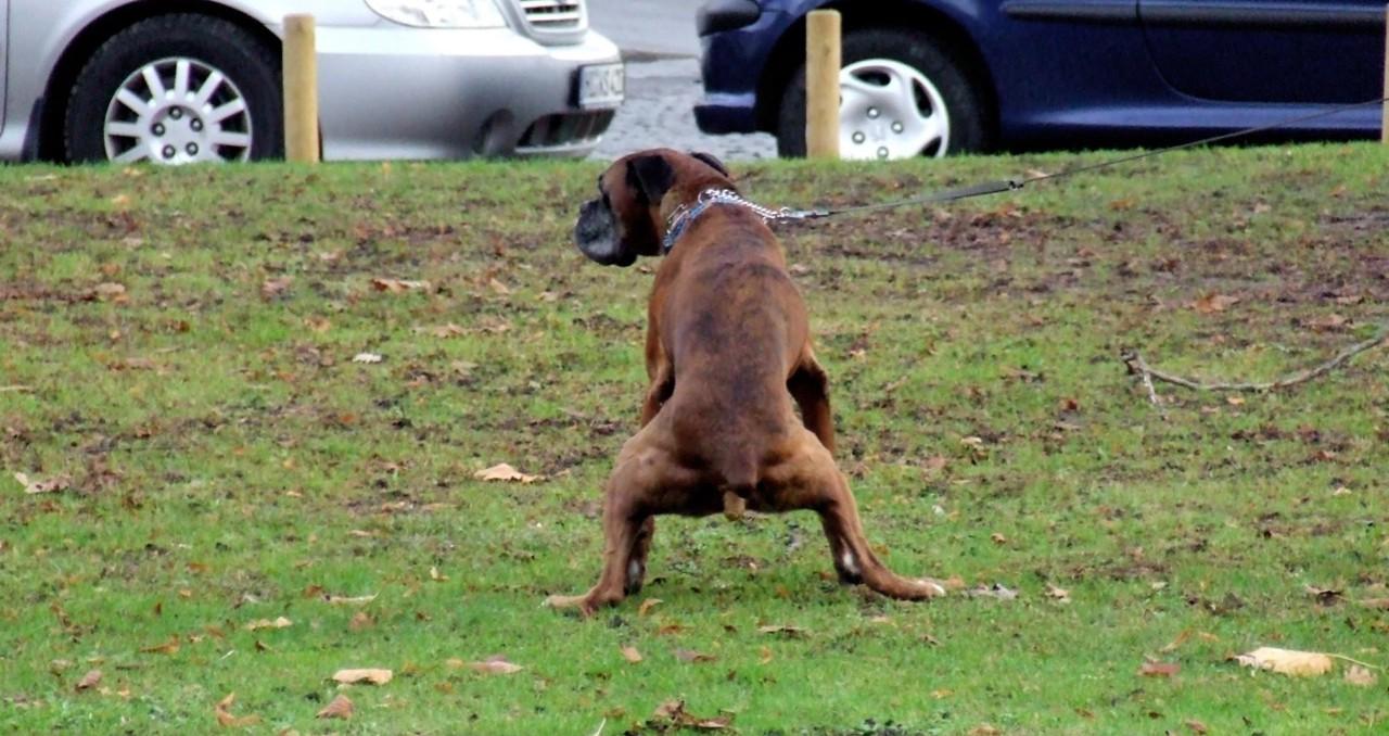 Hondenpoep In Tuin : Gemeente gaat controleren of baasjes hondenpoep wel opruimen